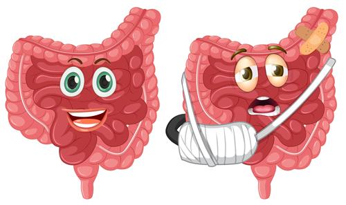 Intestins sain et malade