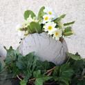 Frühling in der Kugel