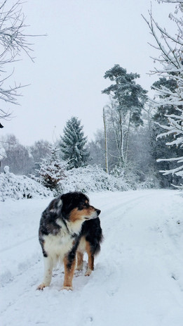 Chili Stonebluff Aussie Winter