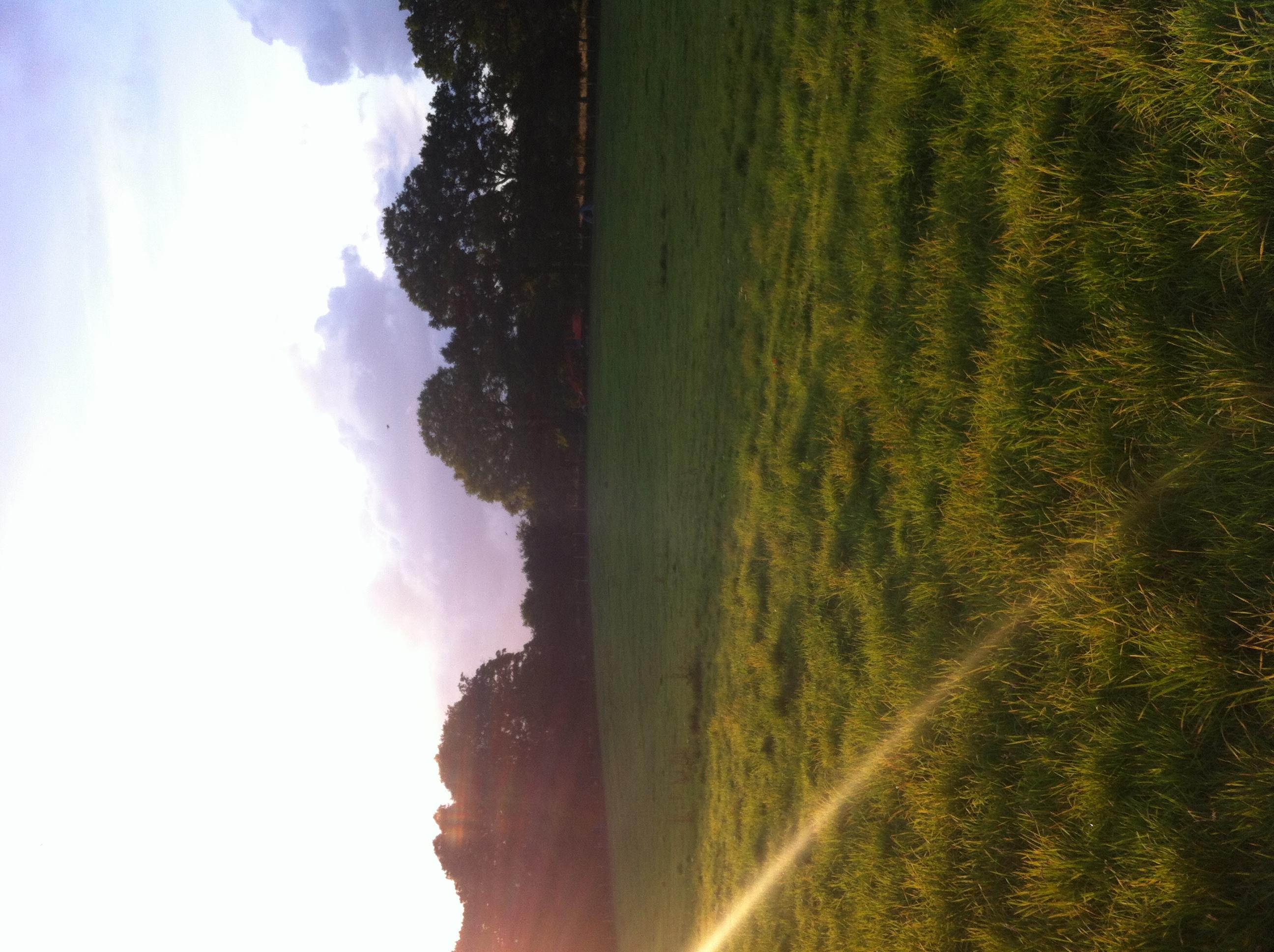 grass shade