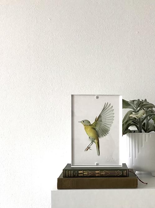 Framed Bird Print (Nashville Warbler)