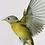 Thumbnail: Framed Bird Print (Nashville Warbler)