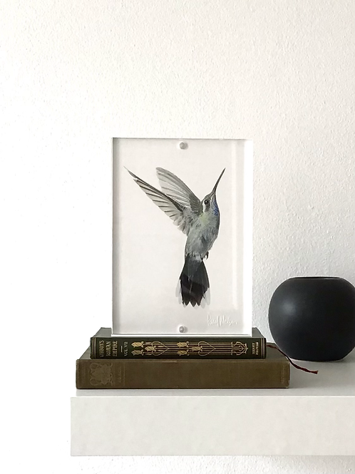 Framed Bird Print (Blue-Throated Hummingbird )