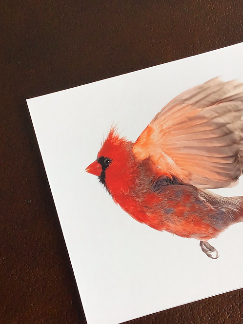 Framed Bird Print (Northern Cardinal)