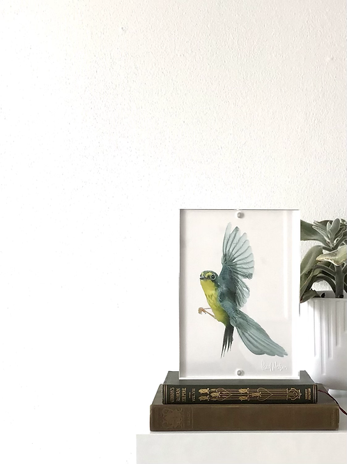 Framed Bird Print (Canada Warbler)