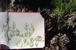 Petit dessin au jardin des plantes _#1_.