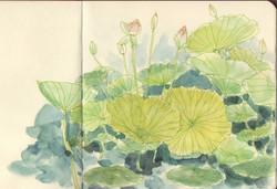 Jardin_des_plantes(1)