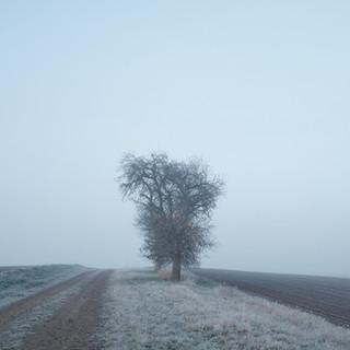 nature_Nov 25 2020JPEG sRGB 2500px_1309