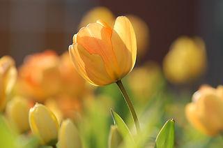 福祉送迎サービス ひかりの花、熊本、kumamoto