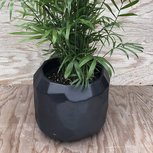 Discovery Pot