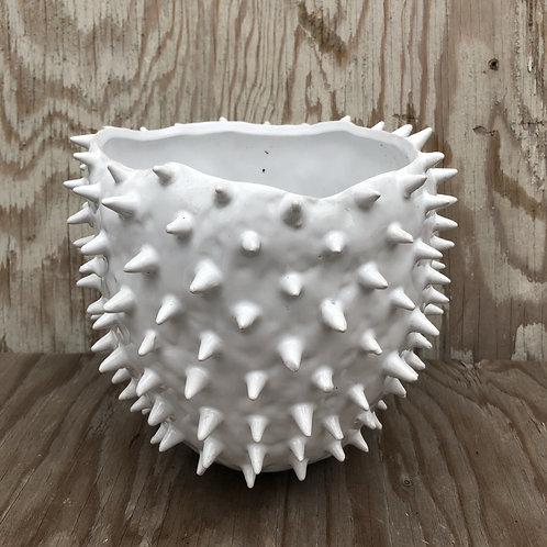 Cacti Pot