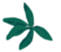 pasionaria - hojas.png