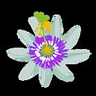 pasionaria - flor.png