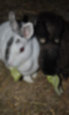 Hunde-Fotos