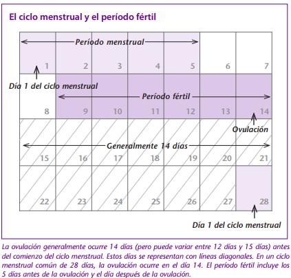 El ciclo menstrual y el período fértil