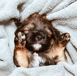 Cuddly Puppies in Gainesville