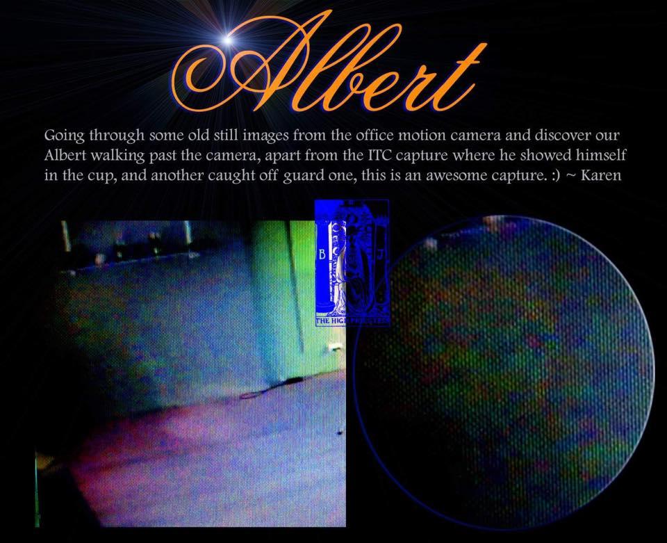 Albert captured on webcam