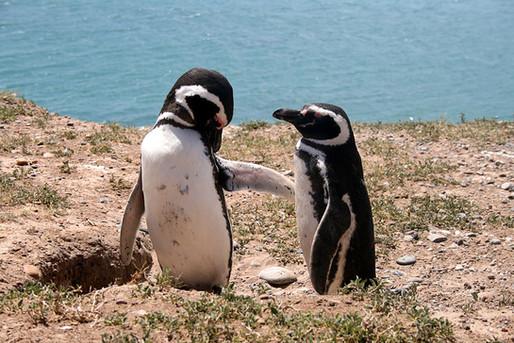 calidad pinguinos.jpg