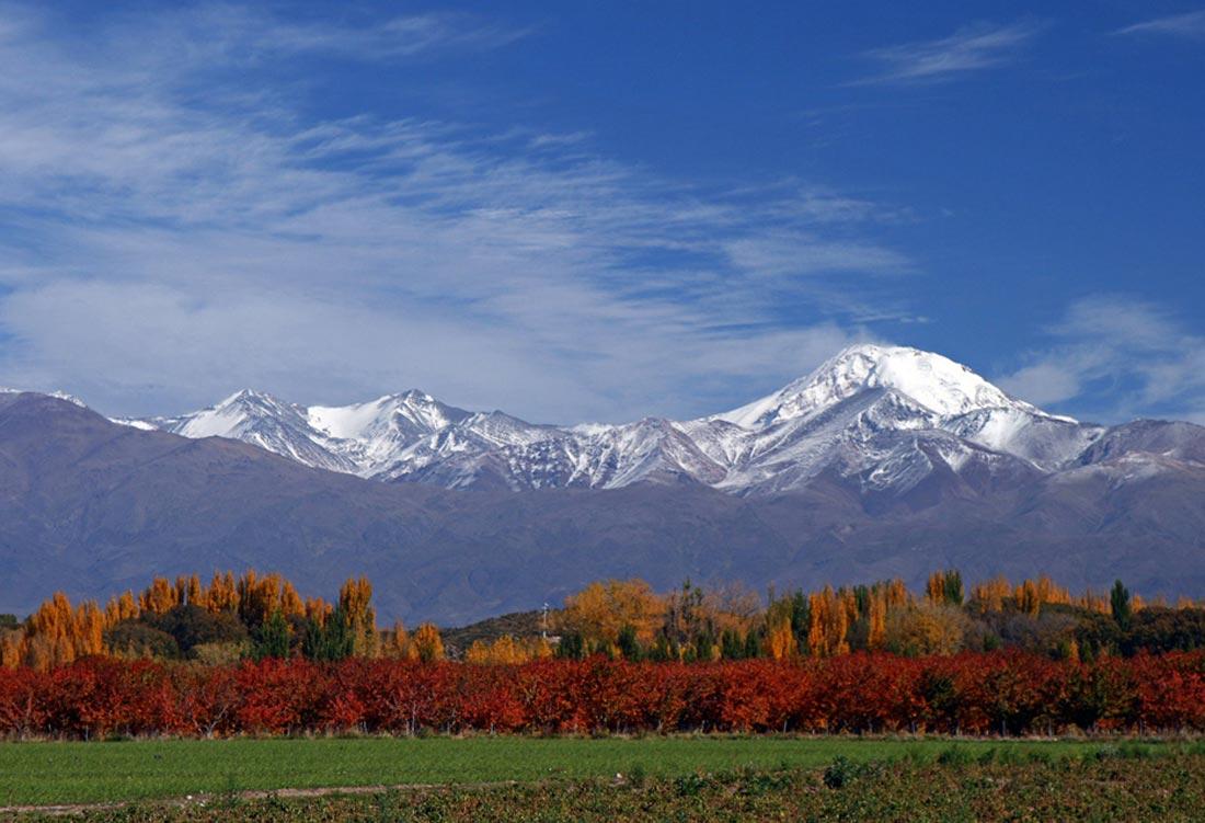 Mendoza-vis