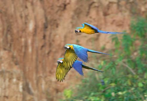 papagallos_edited.jpg