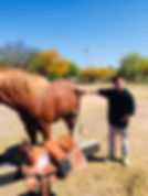 EQUINE THERAPY2