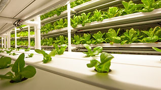 inside of cropbox hydroponic container farm growing leafy greens