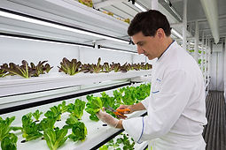 a chef inside a cropbox hydroponic container farm