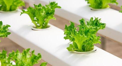hydroponic-farming-pixabay.jpg