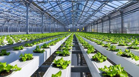 Hydroponic farm.jpg