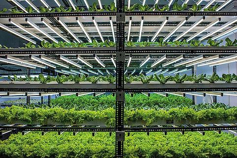 Indoor Hydroponic farm.jpg