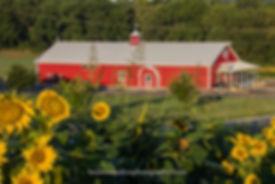sunflower foreground whole creamery back