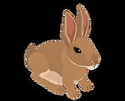 Rabbit_edited.png