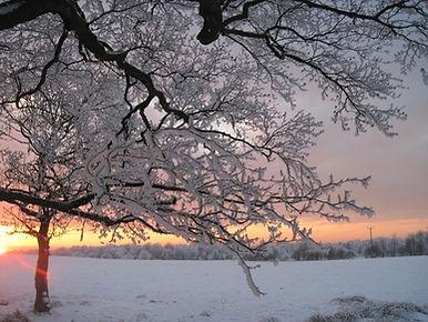 Winter in the Moss, Muirhead