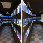 Lighting Upgrade in Fish Room