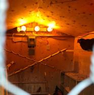 Chicken Coop Lighting