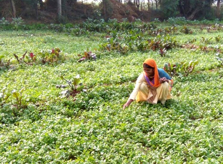 Vegetable cultivation adds income