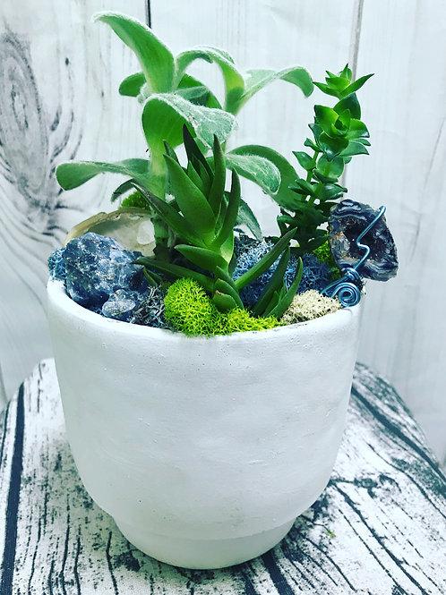 Concrete Succulents