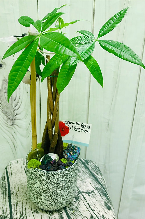 Zinni's Money Tree with Gemstones and Friends