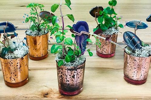 Stylized Mini Plantscapes