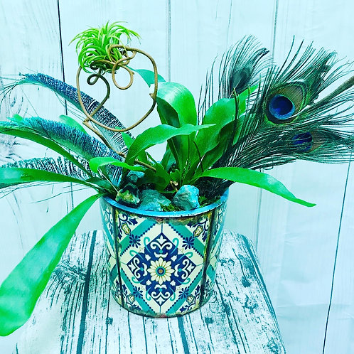 Staghorn Fern and Air Plant
