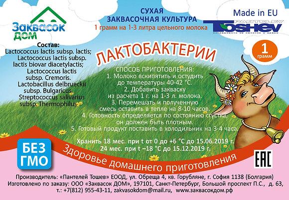 Toshev Лактобактерии