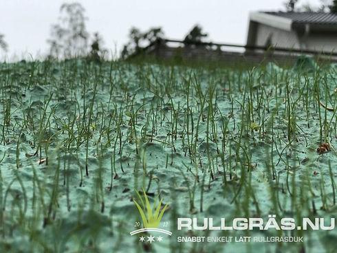 rullgräs2.jpg