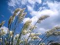 wind01.jpg