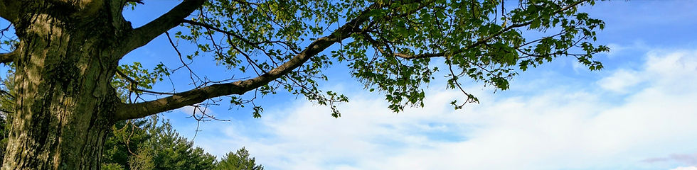 KWAP_TreeSky_Banner_1020x250.jpg