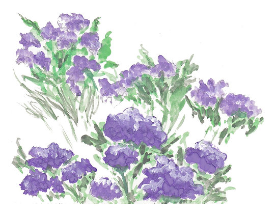 Lavendar Flowers Notecard