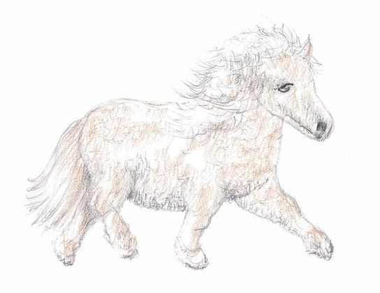 Pretty Pony Notecard