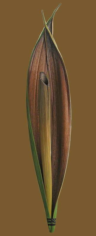 Organic-ceramic-01.jpg