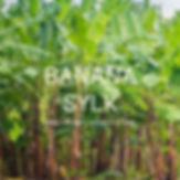 BANANA SYLK.jpg