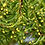 Thumbnail: 40x40 AYURVASTRA HANDLOOM ORGANIC COTTON. Pink/Tumeric  42 medicinal plants