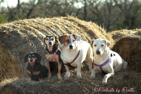 Dog Pet Photo